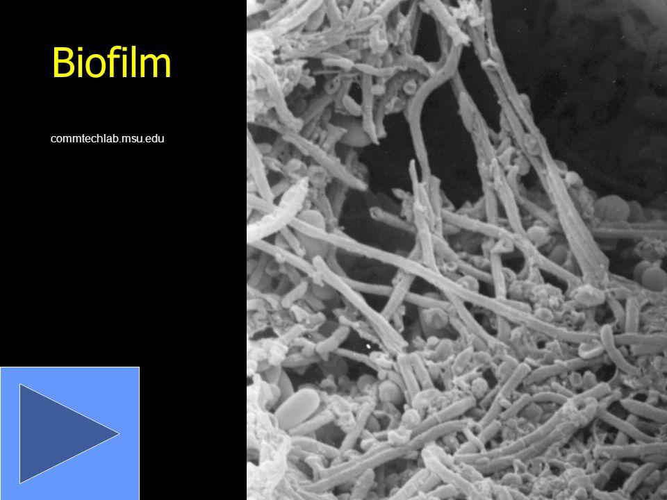 Biofilm commtechlab.msu.edu