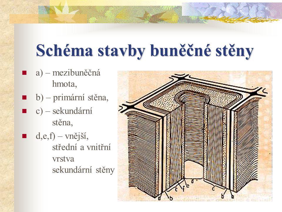 Schéma stavby buněčné stěny