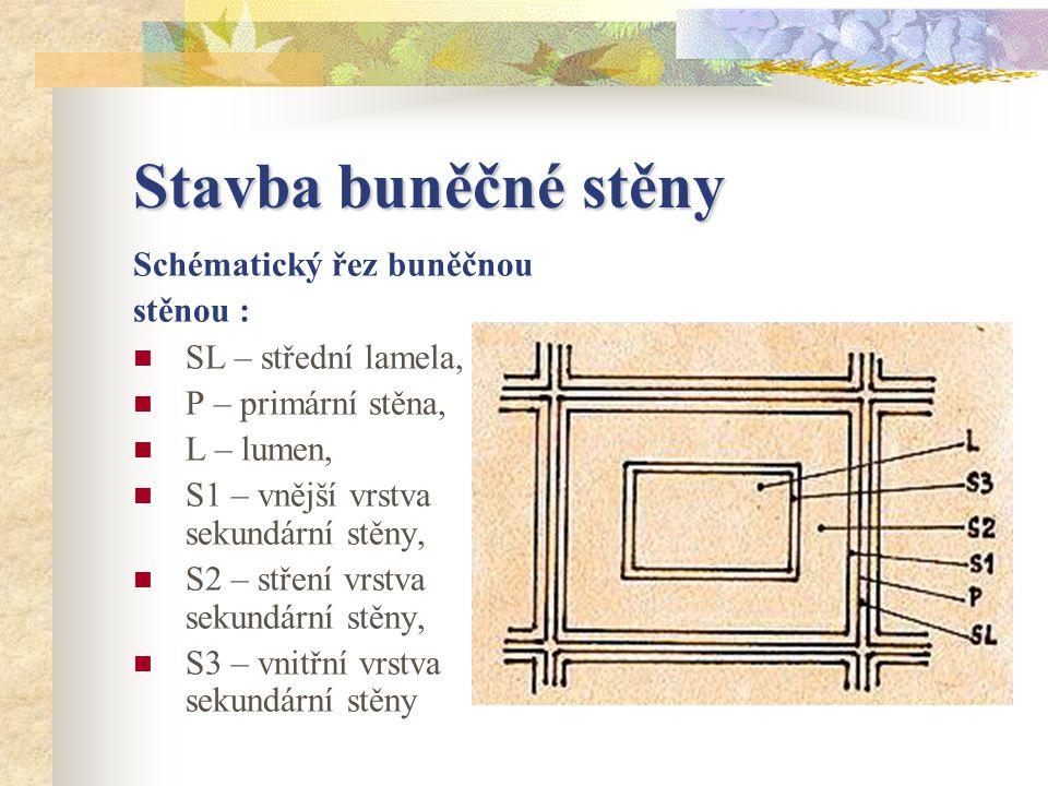 Stavba buněčné stěny Schématický řez buněčnou stěnou :
