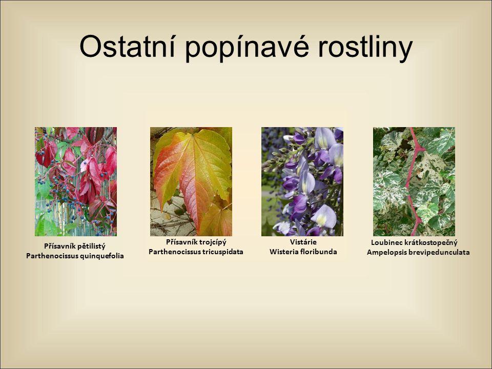 Ostatní popínavé rostliny