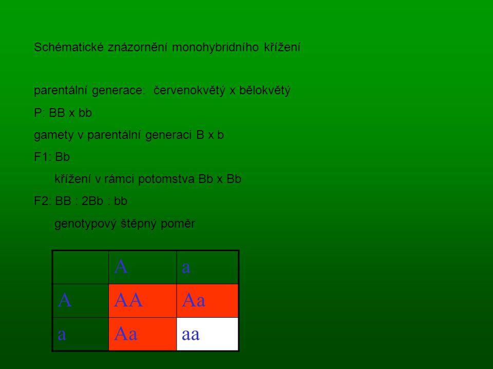 A a AA Aa aa Schématické znázornění monohybridního křížení