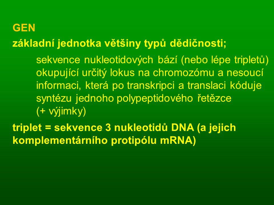 GEN základní jednotka většiny typů dědičnosti; sekvence nukleotidových bází (nebo lépe tripletů) okupující určitý lokus na chromozómu a nesoucí.