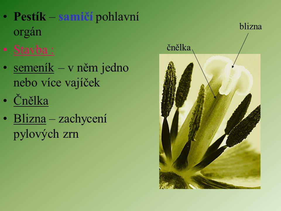 Pestík – samičí pohlavní orgán Stavba :