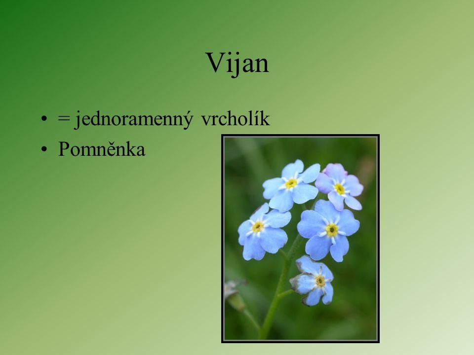 Vijan = jednoramenný vrcholík Pomněnka
