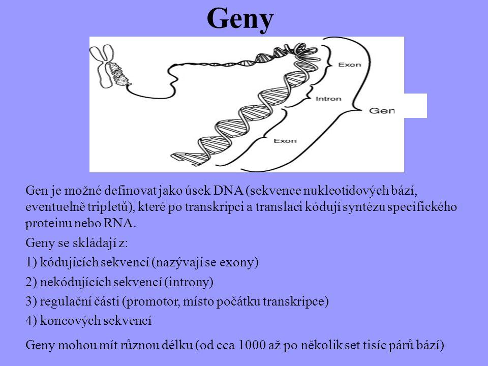 Geny a.