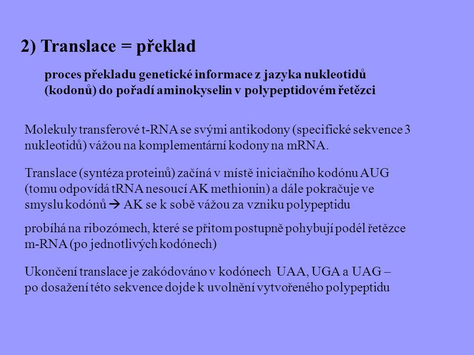2) Translace = překlad proces překladu genetické informace z jazyka nukleotidů (kodonů) do pořadí aminokyselin v polypeptidovém řetězci.