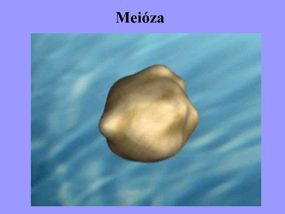 Meióza