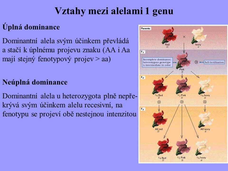 Vztahy mezi alelami 1 genu