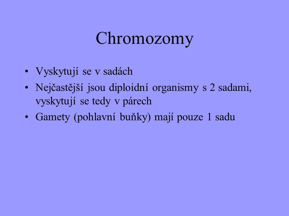 Chromozomy Vyskytují se v sadách