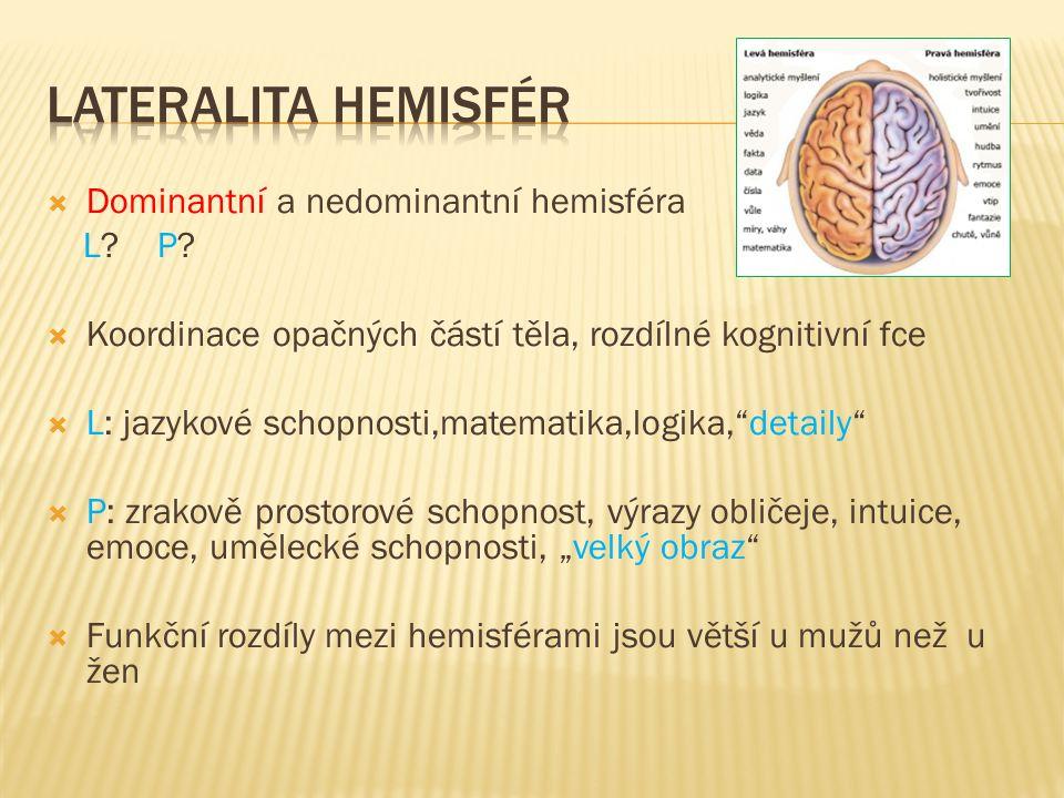 Lateralita hemisfér Dominantní a nedominantní hemisféra L P