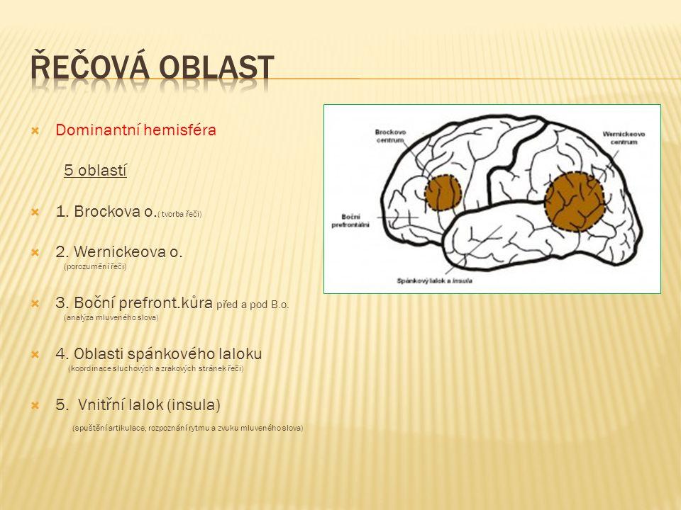 řečová oblast Dominantní hemisféra 5 oblastí
