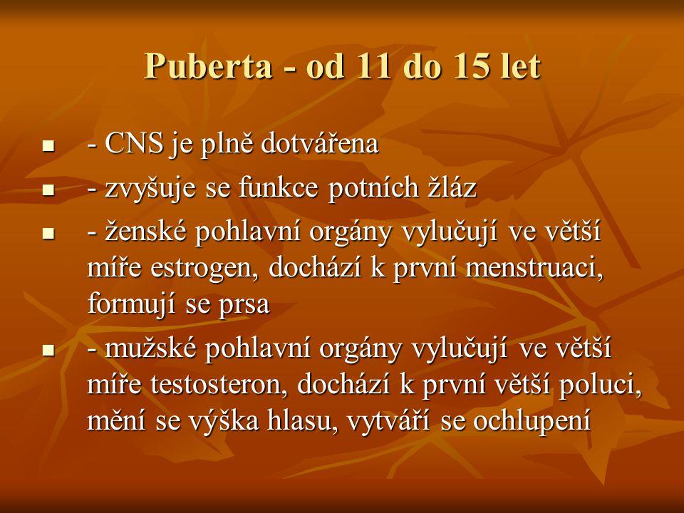 Puberta - od 11 do 15 let - CNS je plně dotvářena