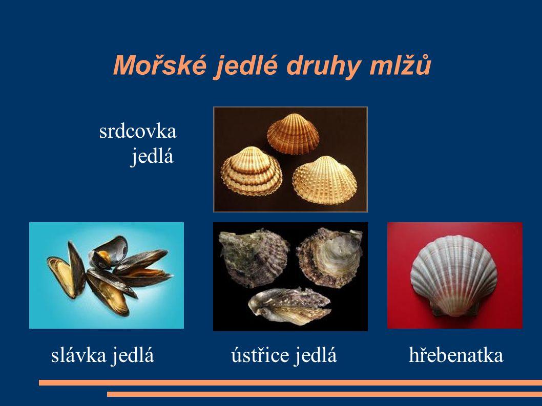Mořské jedlé druhy mlžů