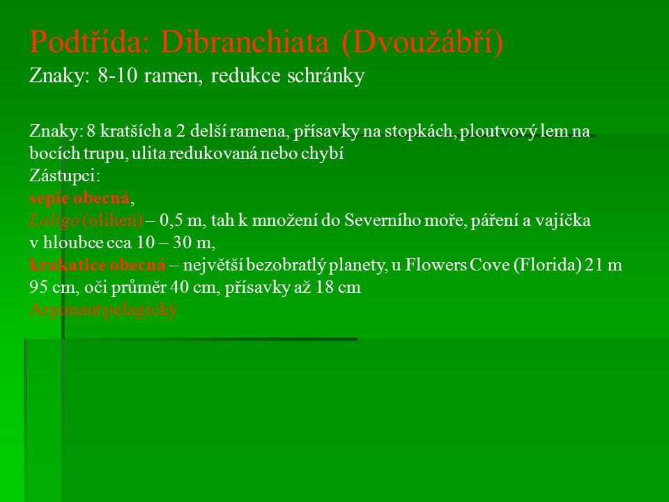Podtřída: Dibranchiata (Dvoužábří)