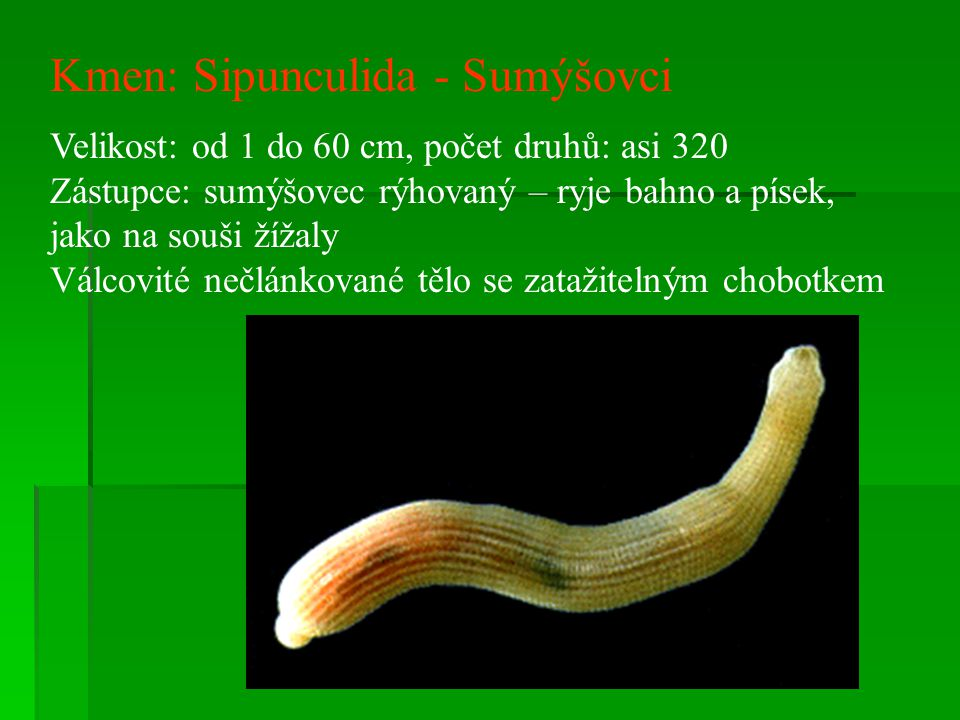 Kmen: Sipunculida - Sumýšovci