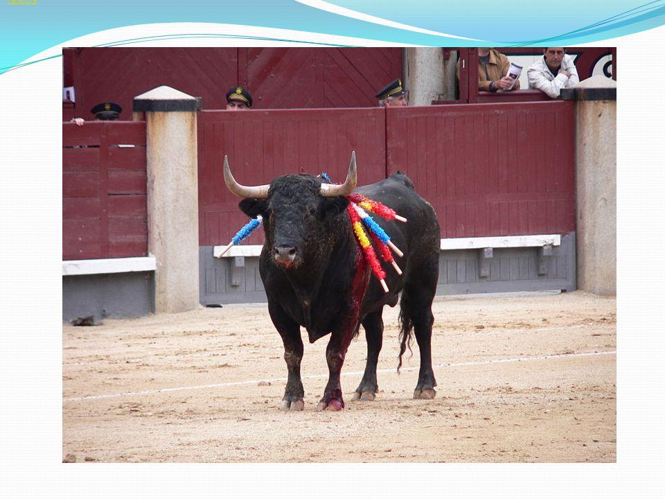 Galicie Asturie. Kantábrie. Baskicko. Navarra. La Rioja. Kastilie a León. Madrid. Extremadura.
