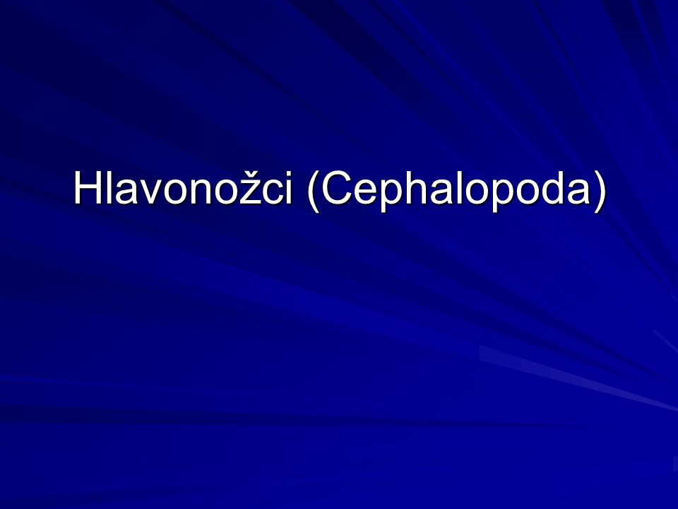 Hlavonožci (Cephalopoda)