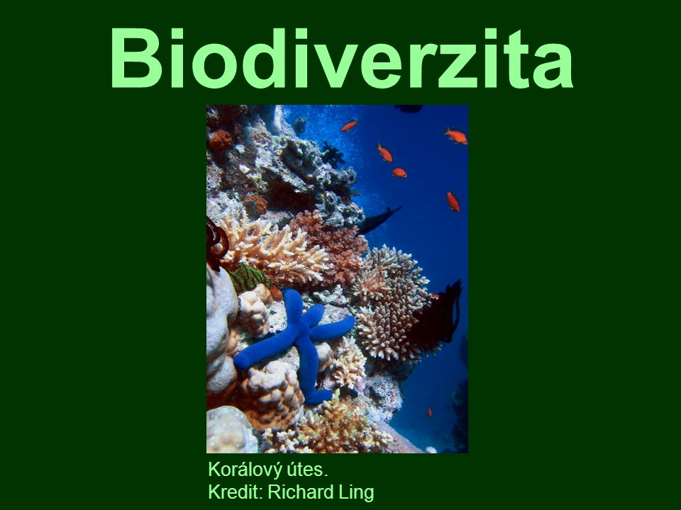 Biodiverzita Korálový útes. Kredit: Richard Ling