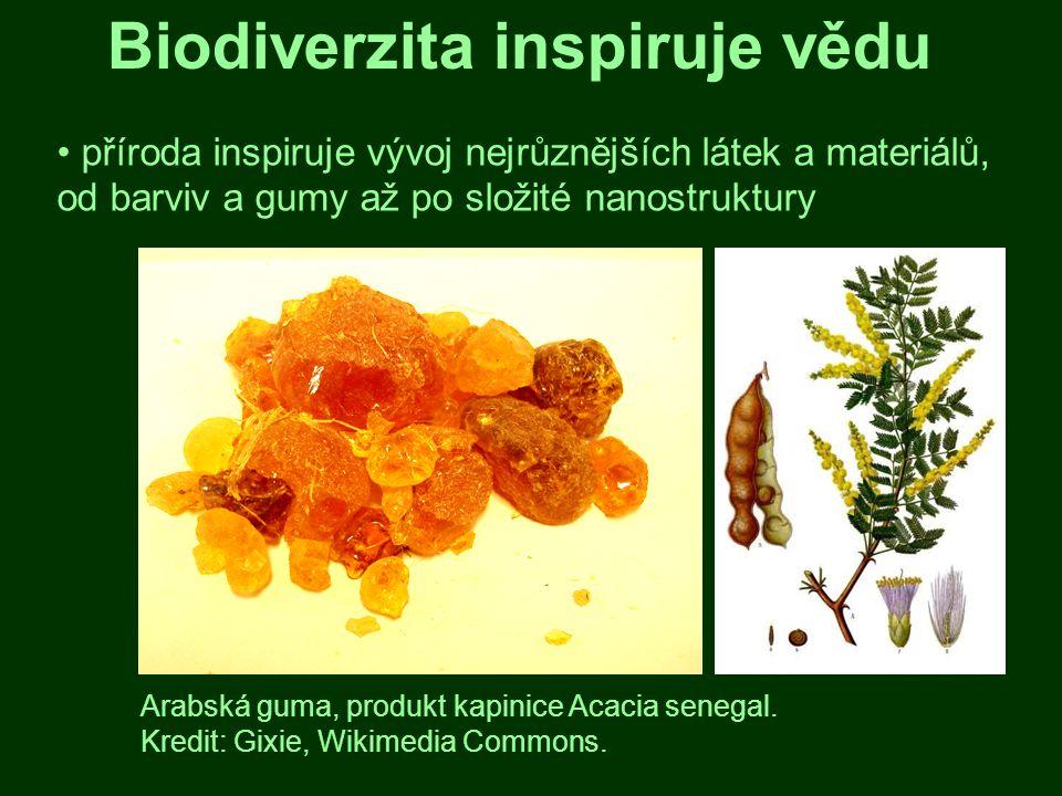 Biodiverzita inspiruje vědu