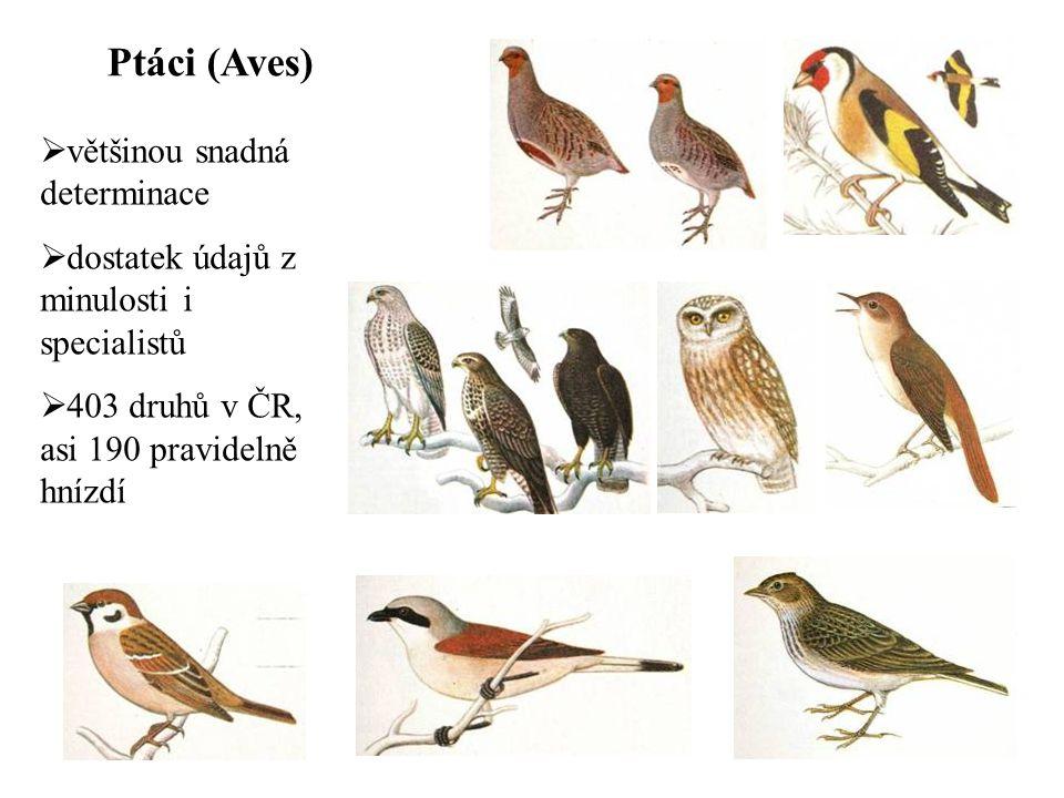 Ptáci (Aves) většinou snadná determinace