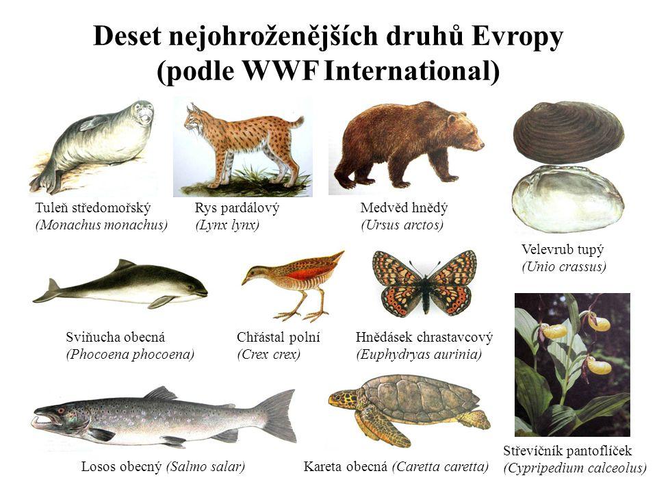 Deset nejohroženějších druhů Evropy (podle WWF International)