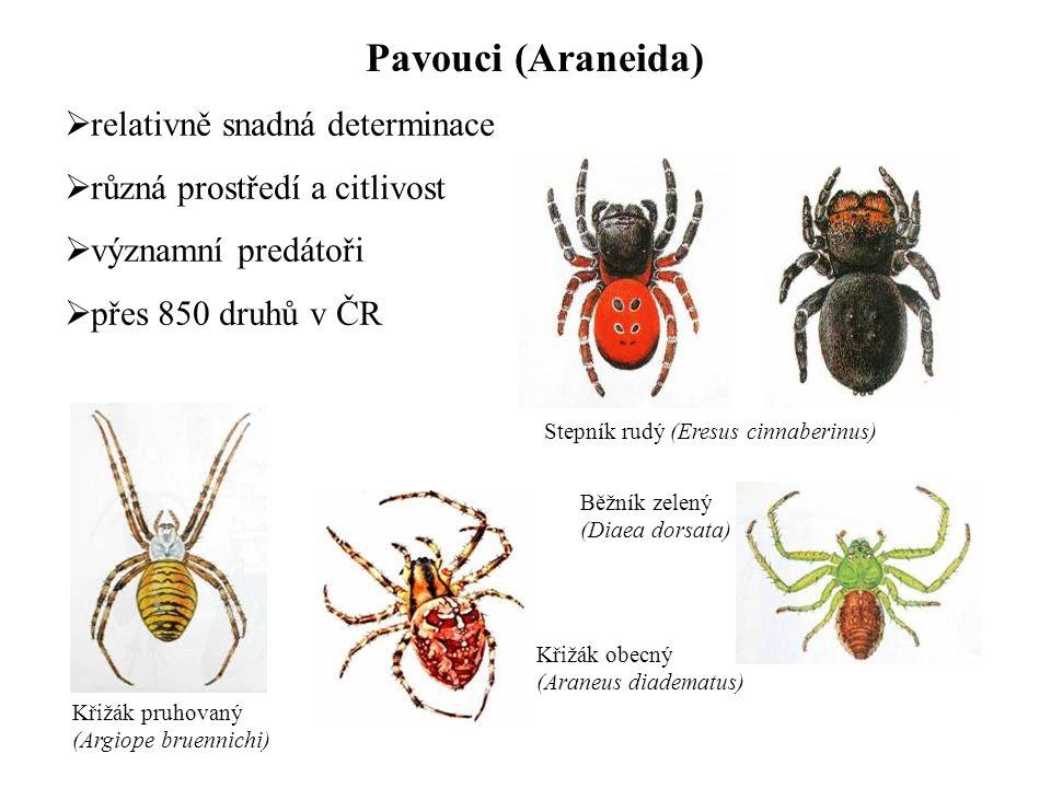 Pavouci (Araneida) relativně snadná determinace