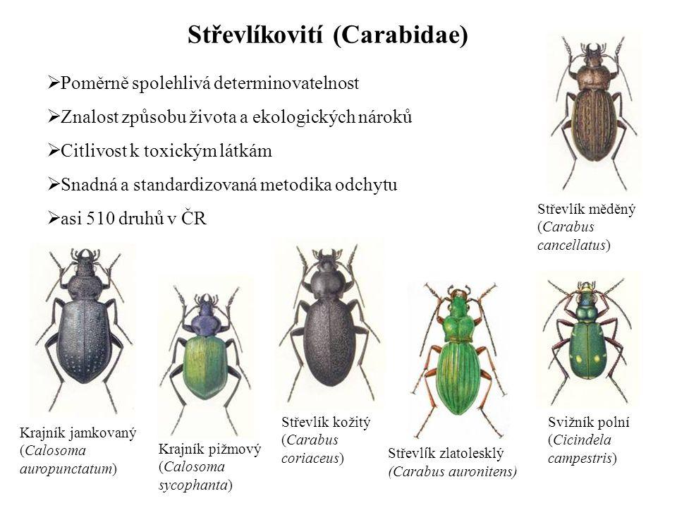 Střevlíkovití (Carabidae)