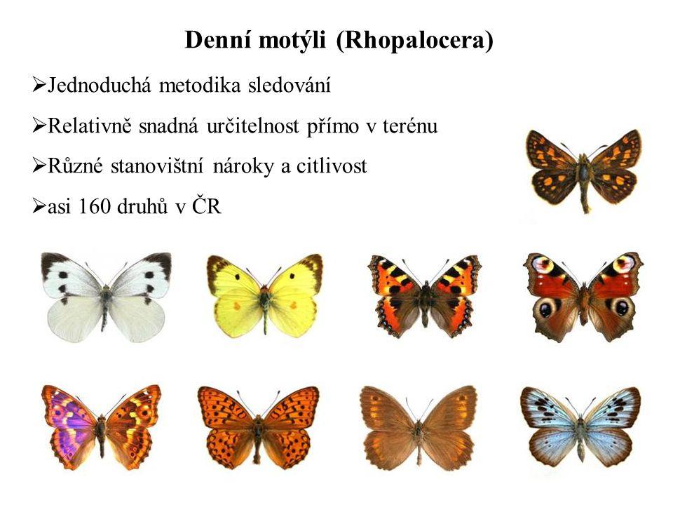 Denní motýli (Rhopalocera)