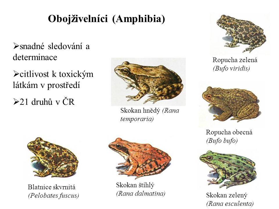 Obojživelníci (Amphibia)