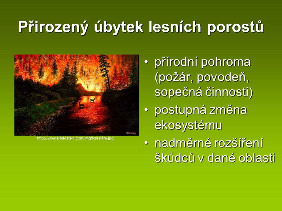Přirozený úbytek lesních porostů