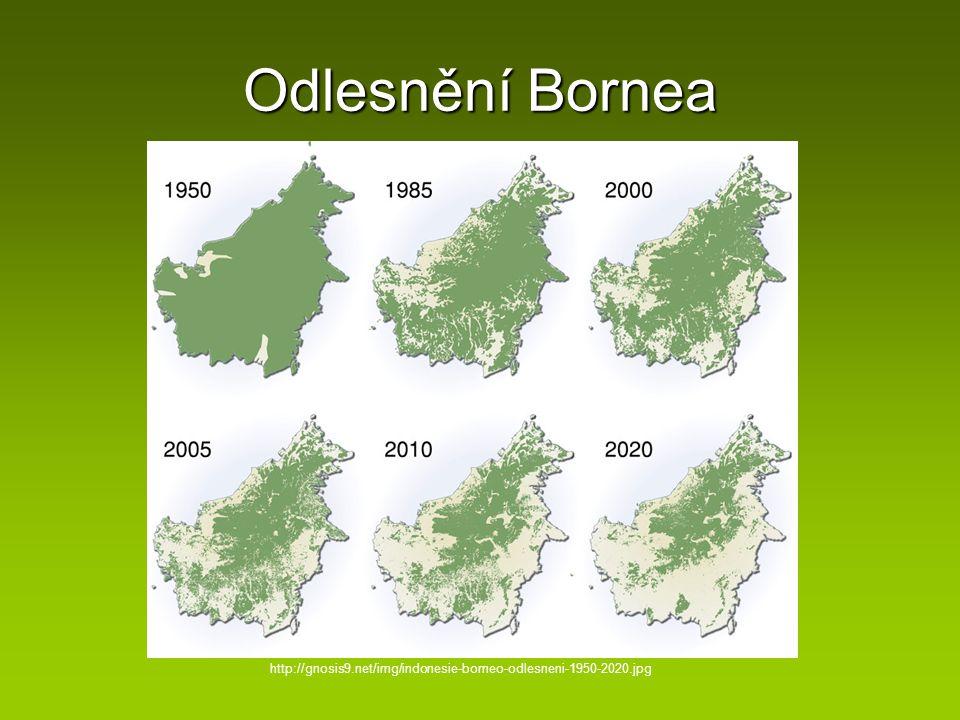 Odlesnění Bornea http://gnosis9.net/img/indonesie-borneo-odlesneni-1950-2020.jpg