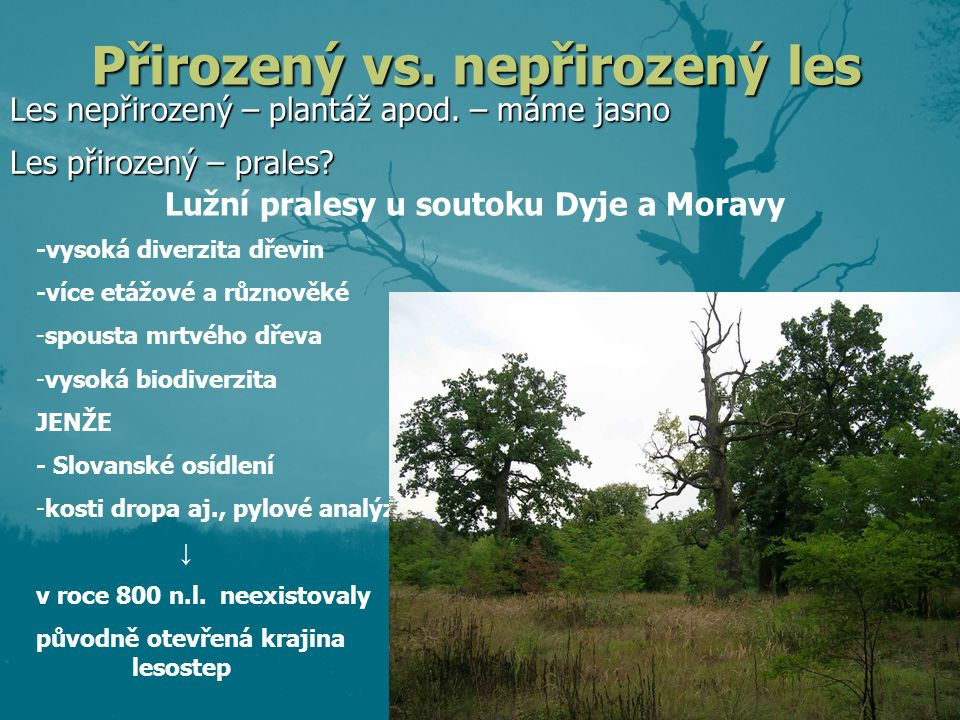 Přirozený vs. nepřirozený les