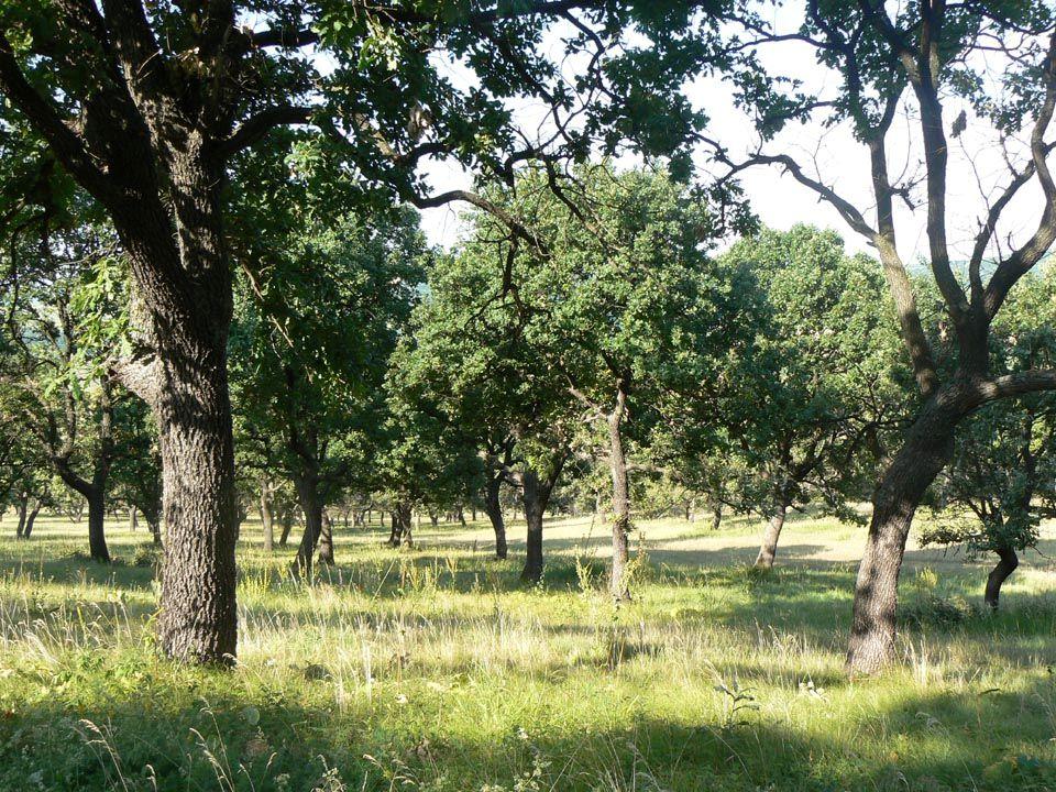 Co nepřežije v bezzásahových lesích