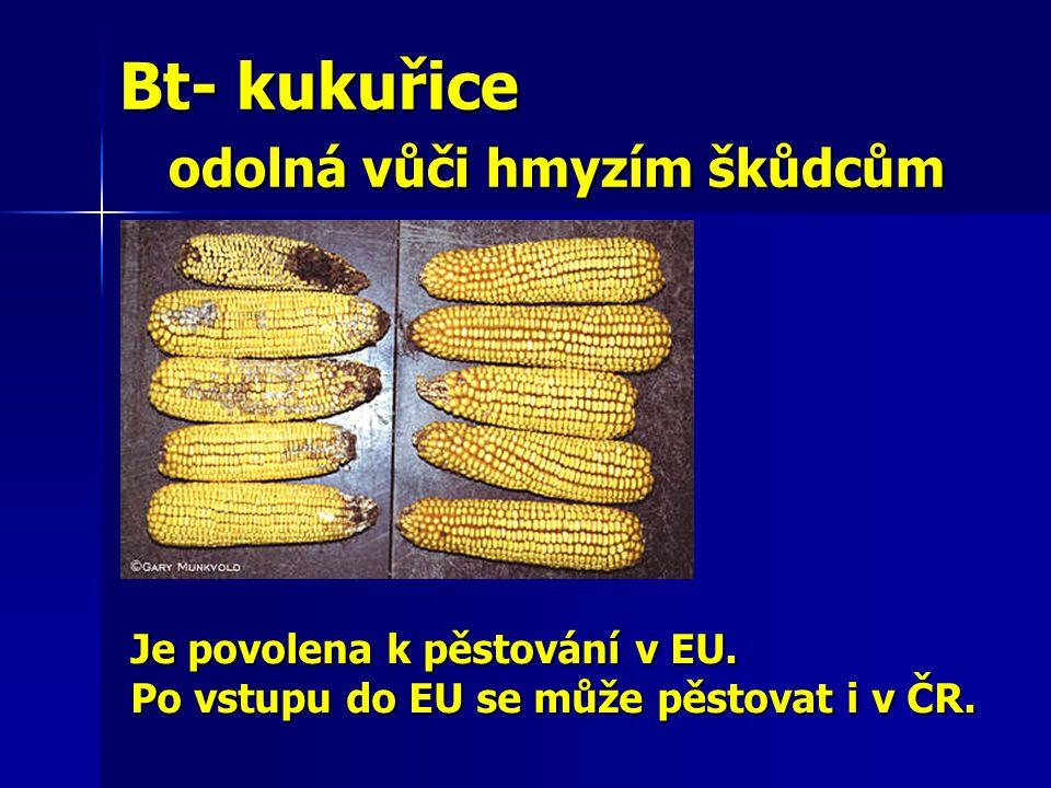 Bt- kukuřice odolná vůči hmyzím škůdcům
