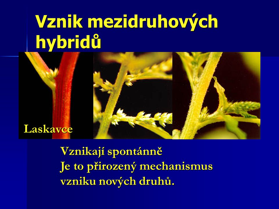 Vznik mezidruhových hybridů