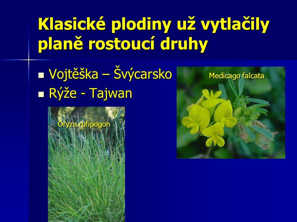 Klasické plodiny už vytlačily planě rostoucí druhy