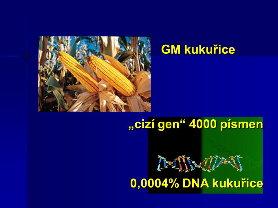 """GM kukuřice """"cizí gen 4000 písmen 0,0004% DNA kukuřice"""