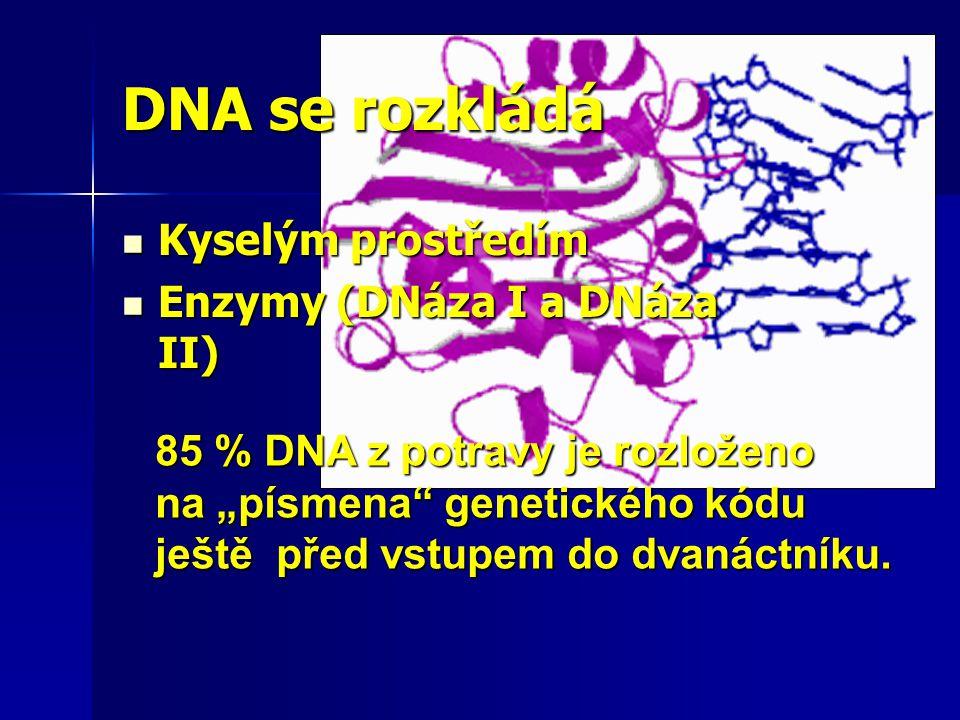 DNA se rozkládá Kyselým prostředím Enzymy (DNáza I a DNáza II)