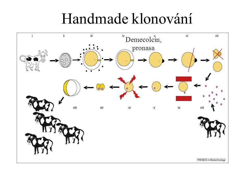 Handmade klonování Demecolcin, pronasa