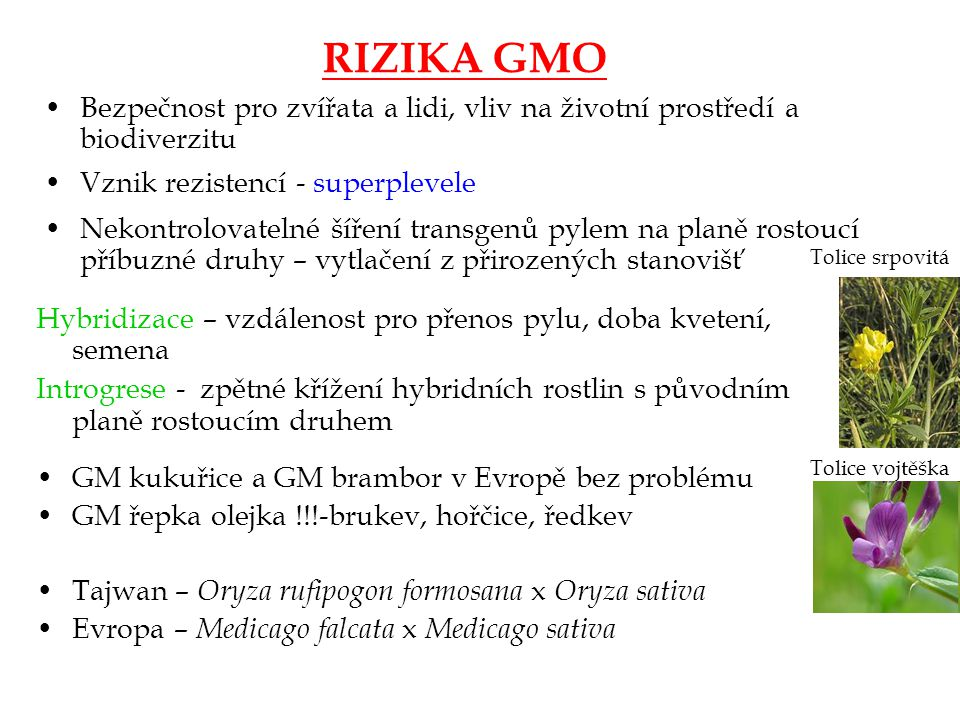 RIZIKA GMO Bezpečnost pro zvířata a lidi, vliv na životní prostředí a biodiverzitu.
