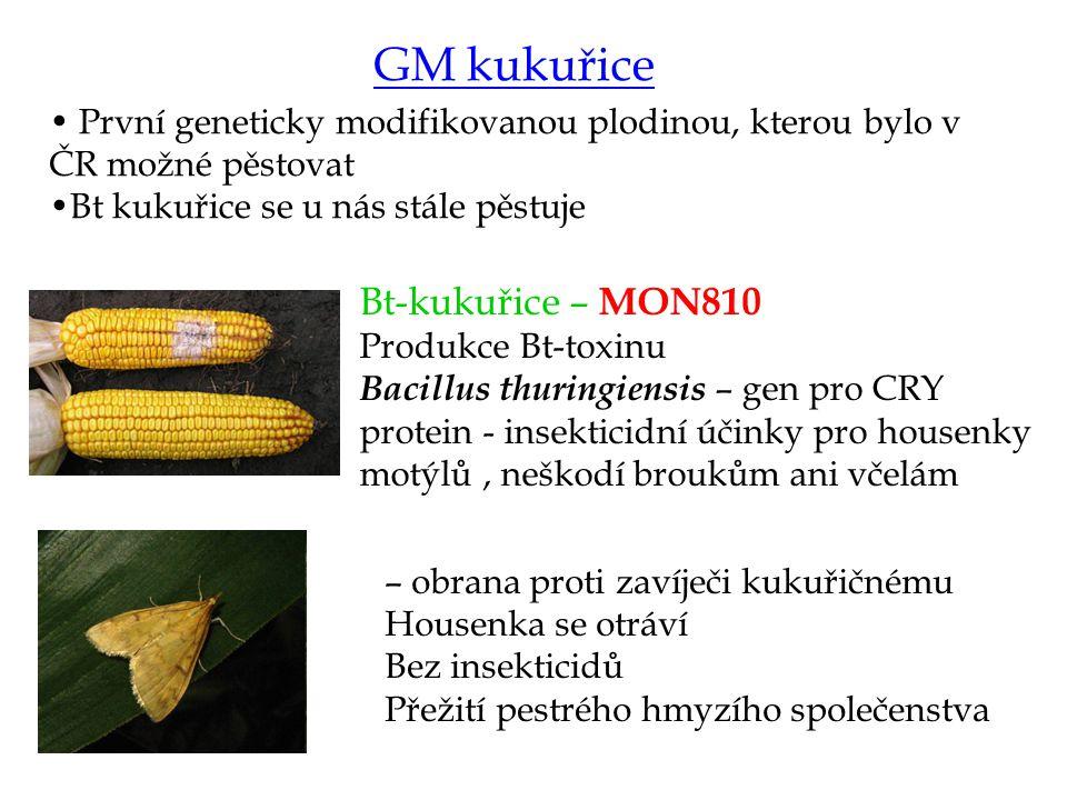 GM kukuřice Bt-kukuřice – MON810