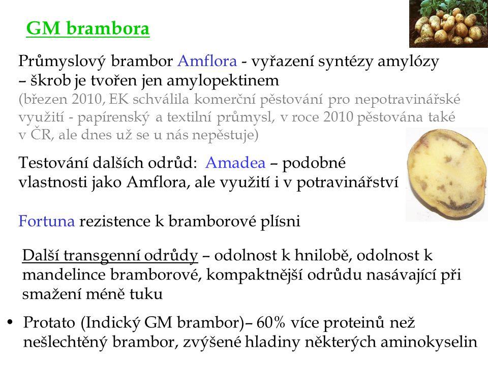 GM brambora Průmyslový brambor Amflora - vyřazení syntézy amylózy