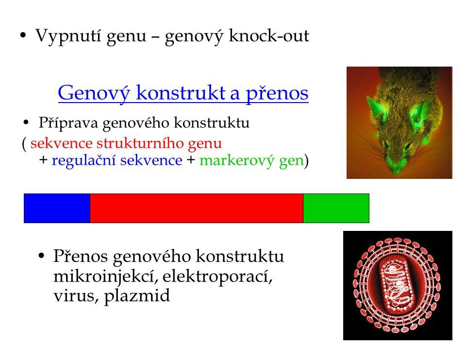 Genový konstrukt a přenos