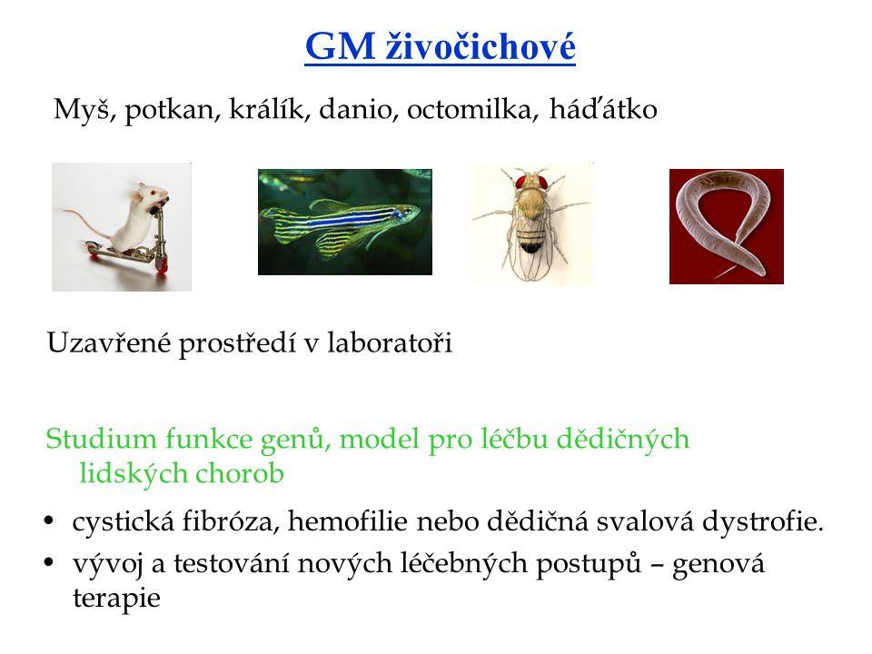 GM živočichové Myš, potkan, králík, danio, octomilka, háďátko