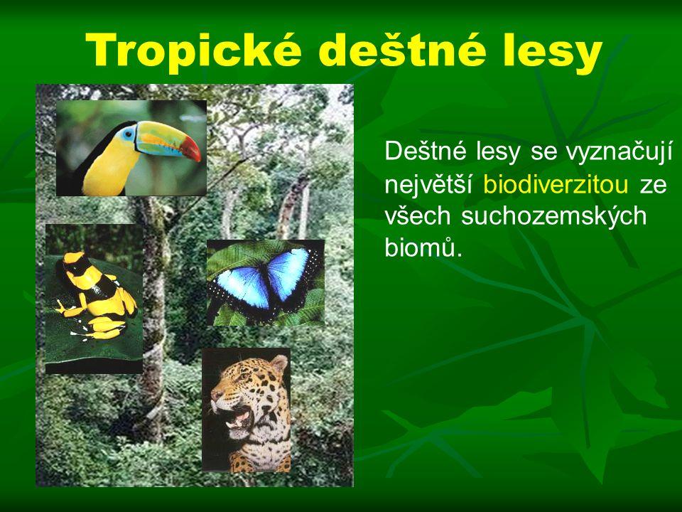 Tropické deštné lesy Deštné lesy se vyznačují největší biodiverzitou ze všech suchozemských biomů.