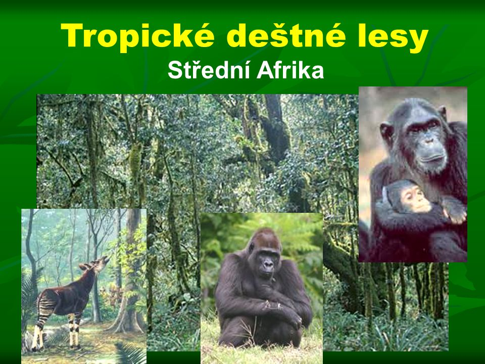 Tropické deštné lesy Střední Afrika