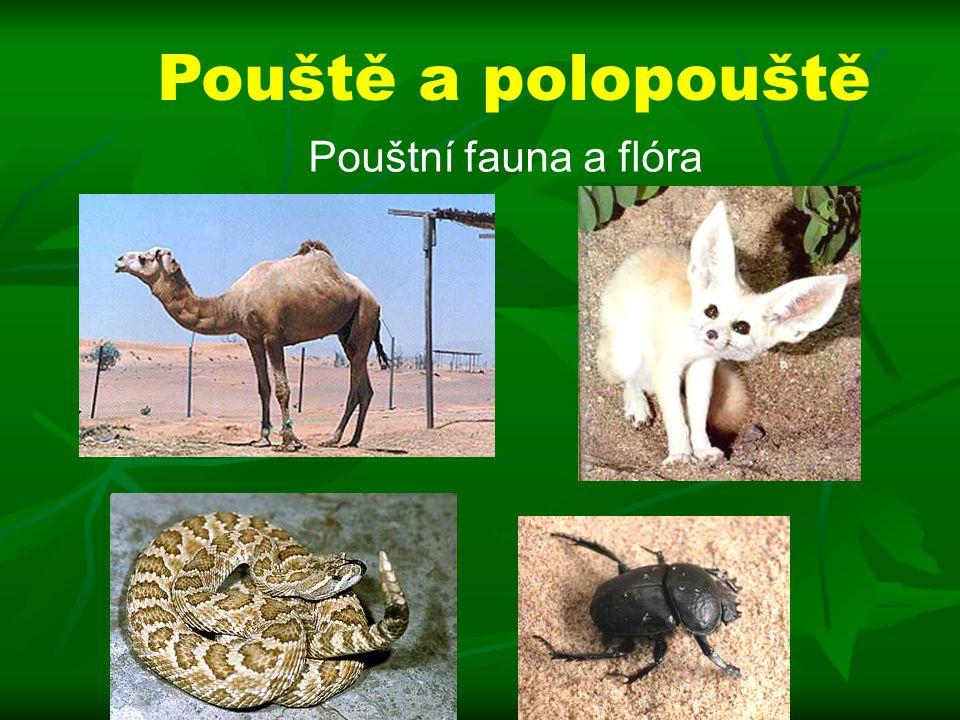 Pouště a polopouště Pouštní fauna a flóra