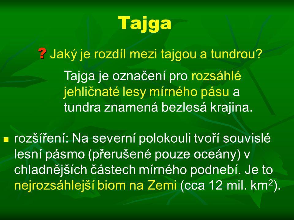 Tajga Jaký je rozdíl mezi tajgou a tundrou