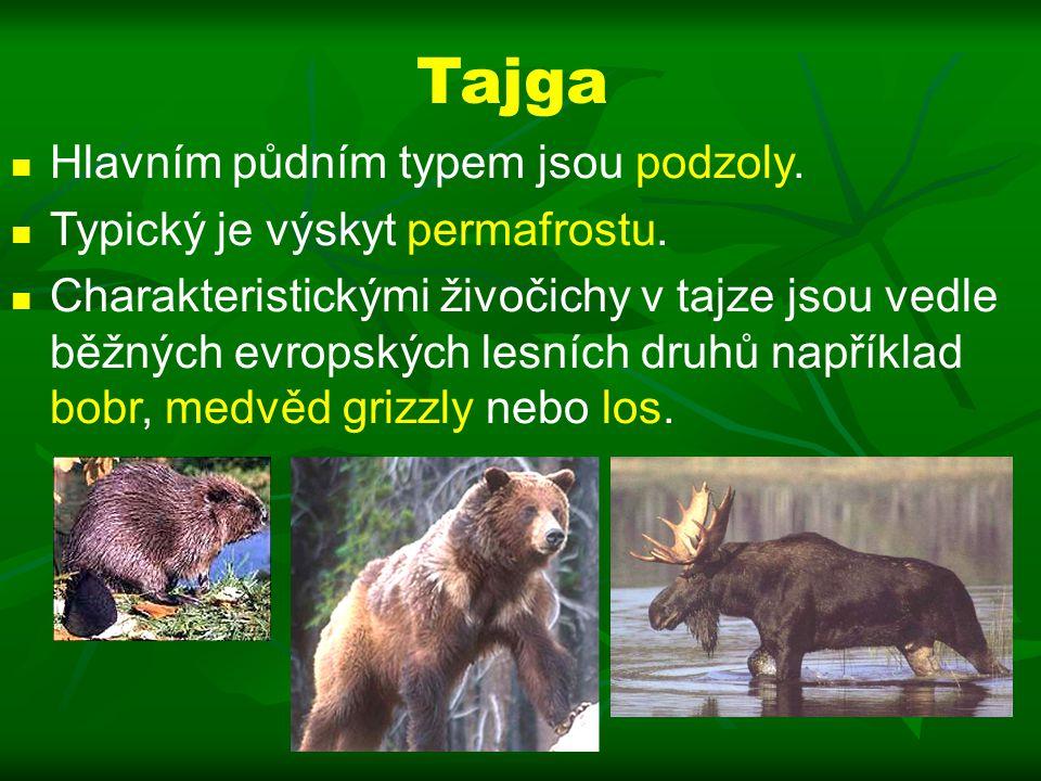 Tajga Hlavním půdním typem jsou podzoly.