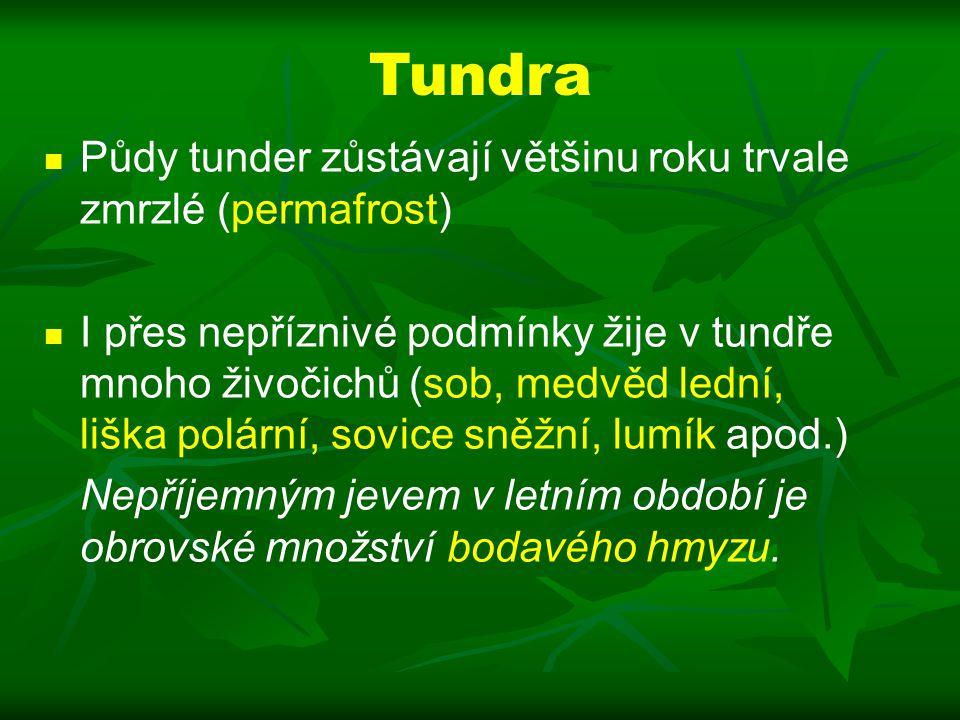 Tundra Půdy tunder zůstávají většinu roku trvale zmrzlé (permafrost)